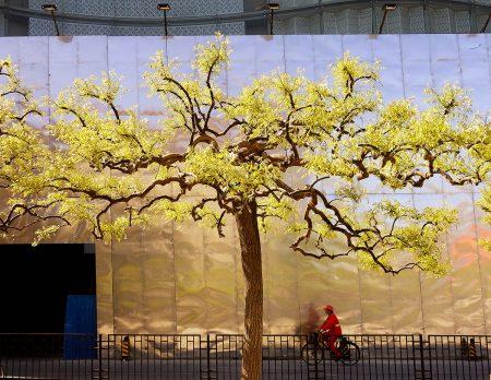 Beijing Spring by David Thurston
