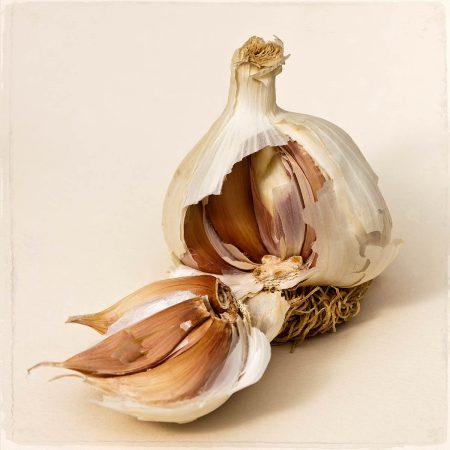 Garlic 'Cristo' by John Glover