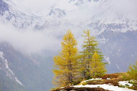 Autumn Larches by Bob Gibbons
