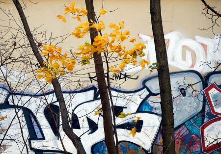 Nature's Graffiti by Jasmine Clegg