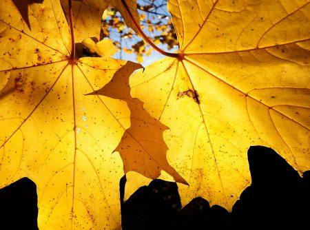 Golden Leaves by Jasmine Clegg