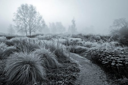 Frosty Garden by Annie Green-Armytage