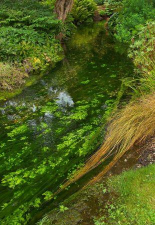 Sussex Chalkstream Flora by Tony Jones