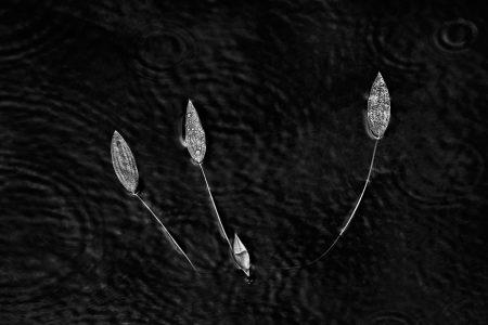 Harris Pool by Robynne Limoges