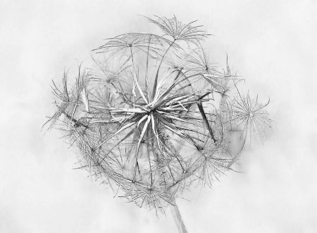Seedhead by Helen Sterne