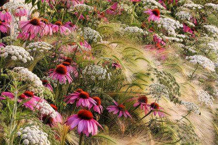 My Prairie Garden by Rosanna Castrini