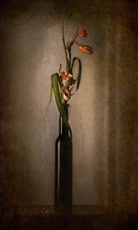Ikebana by Flavio Catalano