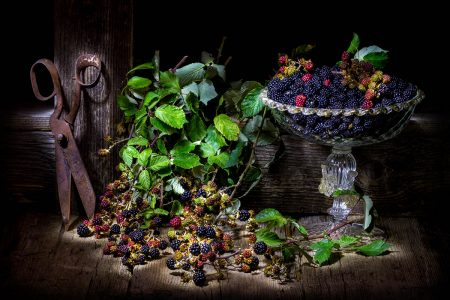 Blackberry Harvest by Manolo Tatti