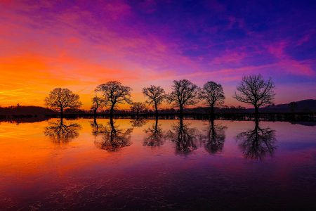 Flooded Oaks by Ben Hirst
