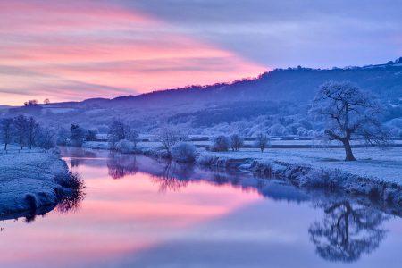 Oak at Dryslwyn in Winter by Nigel McCall