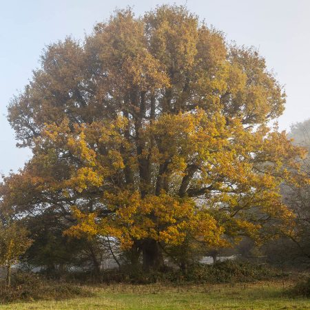 Square Oak by Timothy Smith