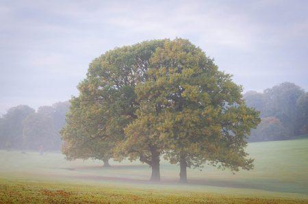 Autumn Mist by Simon Lea