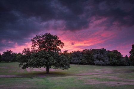 Burning Oak by Simon Lea