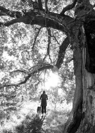 Evening Walk by Susan Lang