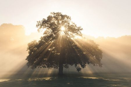 Sunburst Oak by Simon Lea