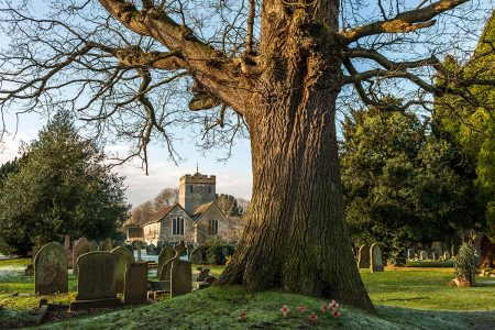 Oak Tree at Charlwood Norman Church by John Glover