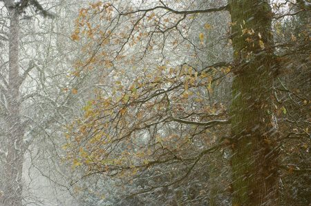 Through Snowfall by Debbie Green