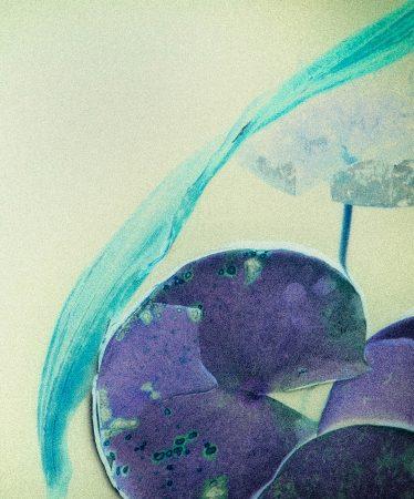 Lilies in Pond by Alma Bibolotti