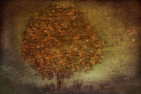 Autumn Tree by Nel Talen