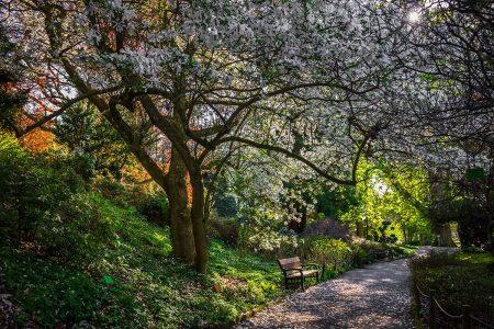 April at the Wojsławice Arboretum by Bożena Piotrowska