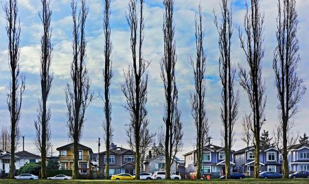 Tall Trees in the City by Gloria King