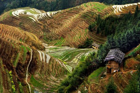 Longji Rice Terraces by Gloria King