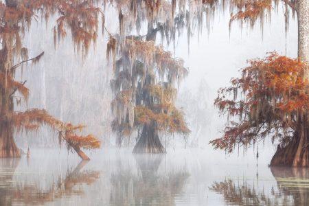 Misty Bayou by Roberto Marchegiani