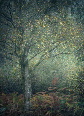 Dappled Light by Paul Mitchell