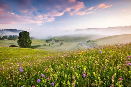 Wildflower Meadows by Richard Bloom
