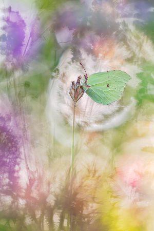 The Leaf by Henrik Spranz