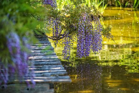 <em>Wisteria</em> along the Water by Natalie Tsai