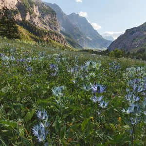 Wildflower Landscapes