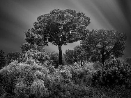Winter Hibernation I by Giuseppe Satriani