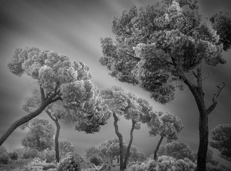 Winter Hibernation II by Giuseppe Satriani