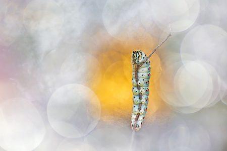 Glamourpillar by Henrik Spranz