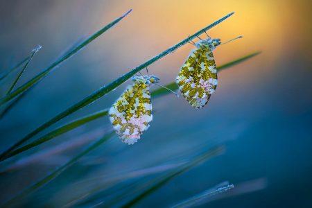 Cold Morning Tips by Petar Sabol