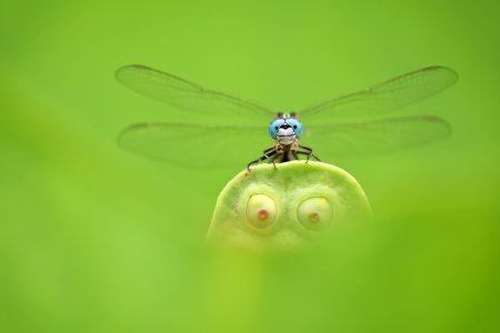 Blue Eyes, Green Eyes by Minghui Yuan