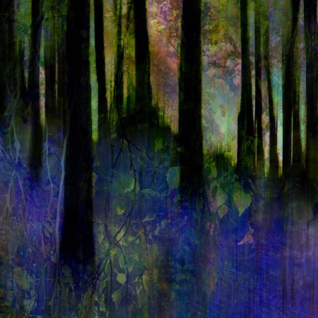 Bluebell Light by Linda Duncalf