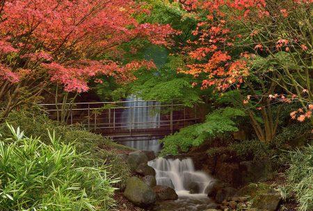 Enchanted Garden by Albert Ceolan
