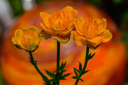 The Power of Orange by Bernhard Danneberg