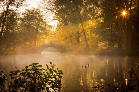 Morning Glory by Lars Gerhardts