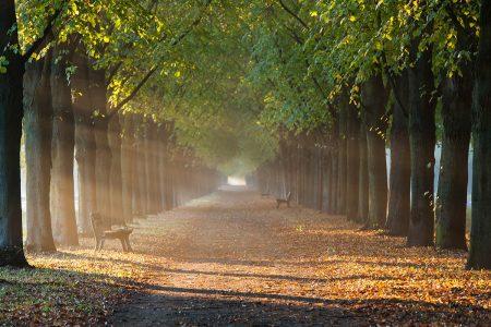 Morning Mist by Monika Windeck