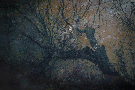 Snowstorm by Nel Talen