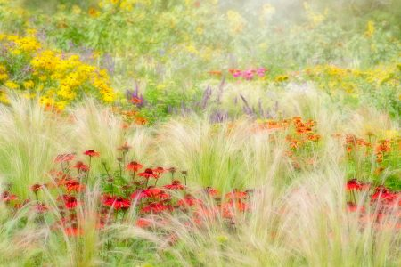 Summer Reverie by Jacky Parker
