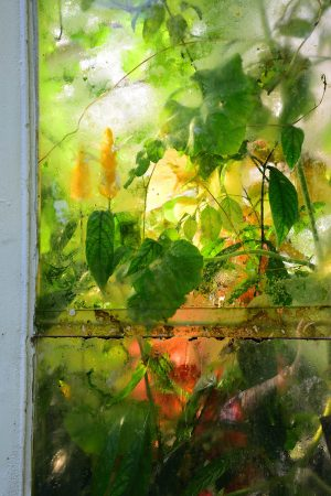Through the Window by Kaz Neal
