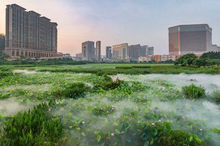 Lotus in the Strip by Wang Tou Kun
