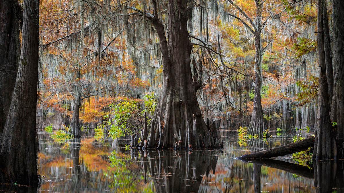 Swamp Elder by Thorsten Scheuermann