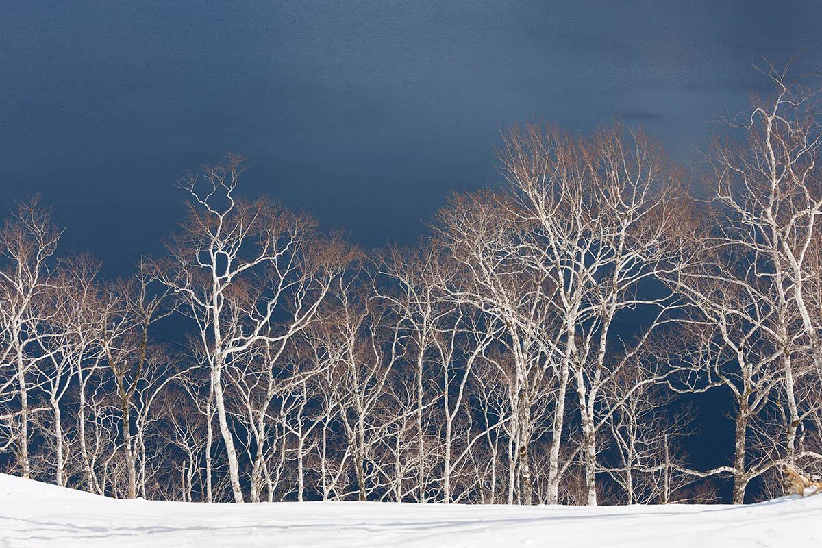 Hokkaido Wild Birch by Christine Adams