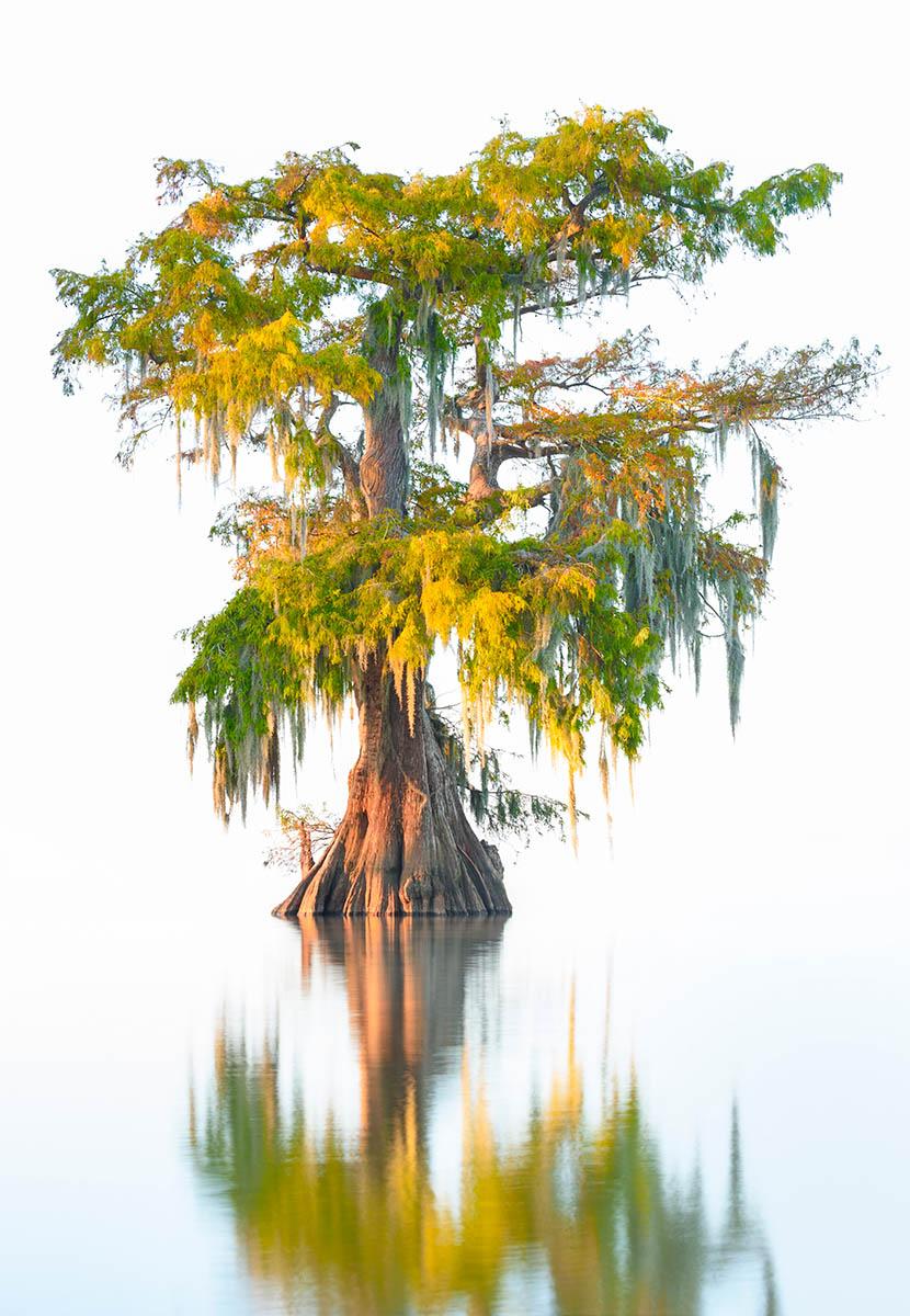 Floating Cypress by Thorsten Scheuermann