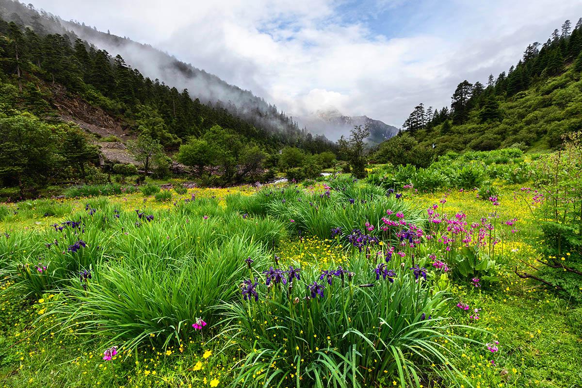 Summer Blooms by Zhigang Li